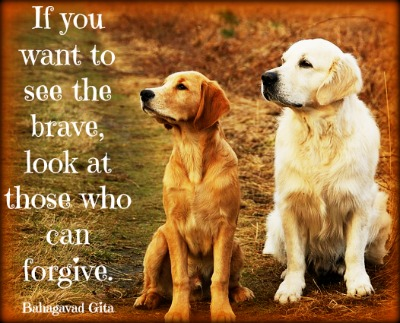 forgiving yourself after dog dies